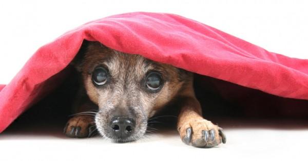 Γεννιέται ένας σκύλος κροτοφοβικός; Ή μήπως γίνεται από τα λάθη μας και από κακές εμπειρίες;