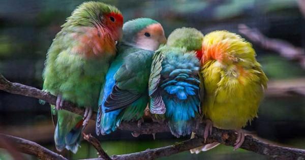 Υπέροχες φωτογραφίες από «αγκαλιασμένα» πουλιά! (Εικόνες)