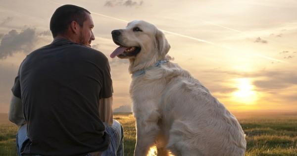 5 συμβουλές για να γίνει ο σκύλος σας… ό,τι ακριβώς χρειάζεστε στη ζωή!