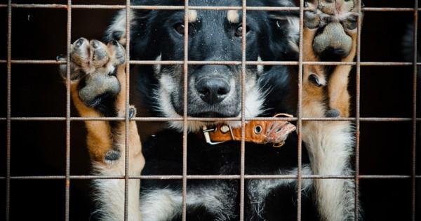 6 σκέψεις που πρέπει να κάνεις πριν επιλέξεις αδέσποτο σκύλο