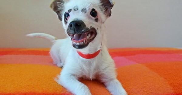 Αυτό το «άσχημο» σκυλί βρήκε μια οικογένεια που κατάφερε να δει όλη την ομορφιά που έκρυβε μέσα του. (Εικόνες)