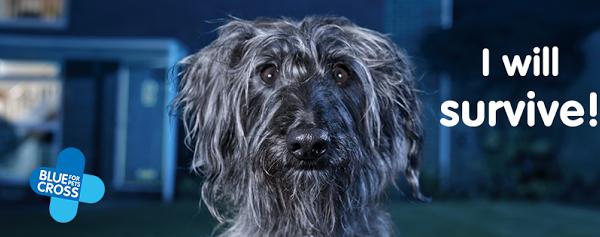 Αδέσποτος σκύλος τραγουδά το »I will survive» και συγκινεί (Bίντεο)