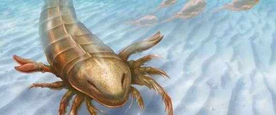 Θαλάσσιος σκορπιός ενάμισι μέτρου με αρχαιοελληνικό όνομα