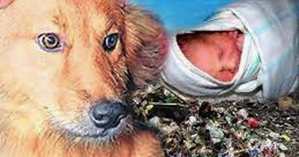 Αυτό το σκυλάκι έσωσε ένα μωρό από το θάνατο! Διαβάστε την απίστευτη ιστορία (Βίντεο)