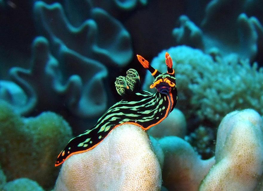 φύση θαλάσσια πλάσματα