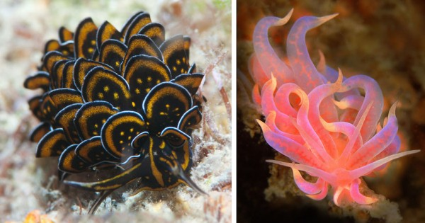 20 θαλάσσια πλάσματα που αποδεικνύουν ότι η φύση έχει ταλέντο με τα χρώματα (Εικόνες)