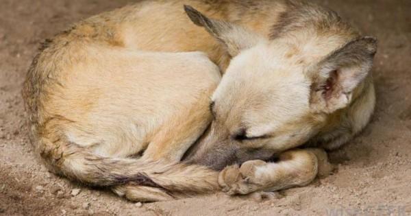 Αν αναρωτιέστε γιατί τα σκυλιά κάνουν κύκλους προτού ξαπλώσουν, ορίστε η απάντηση