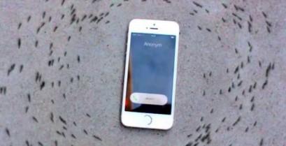 Η περίεργη συμπεριφορά των μυρμηγκιών γύρω από ένα κινητό τηλέφωνο