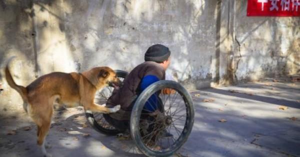 Σκύλος-ήρωας: Σπρώχνει κάθε μέρα το καροτσάκι του ανάπηρου αφεντικού του και τον πάει στην δουλειά