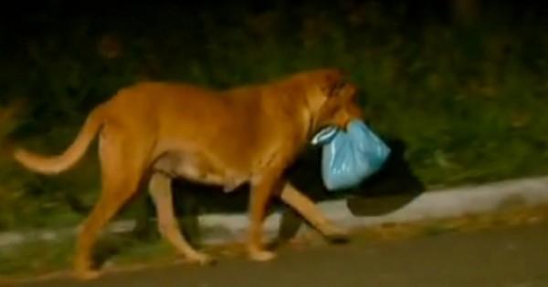Όχι, αυτός ο σκύλος δεν βρήκε αυτή τη σακούλα στα σκουπίδια. Κάνει κάτι που δεν μπορείτε να φανταστείτε (Εικόνες)
