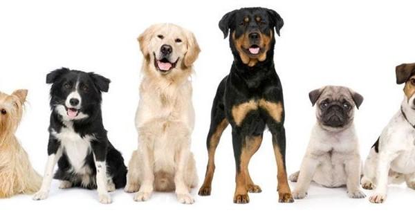 10 μύθοι για τους σκύλους.