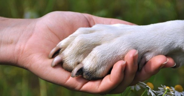 Ένας νεαρός μας εξηγεί γιατί ένα σκυλί δεν φεύγει ποτέ από το πλευρό του ιδιοκτήτη του, ακόμη και μετά το θάνατο του. Διαβάστε το όλοι όσοι έχετε σκύλο….