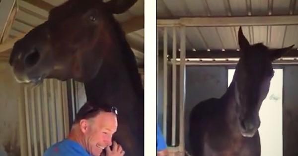 Ο άνδρας τρίβει τον λαιμό του γιγάντιου αλόγου. Κοιτάξτε τώρα την αντίδραση του ζώου! (Βίντεο)