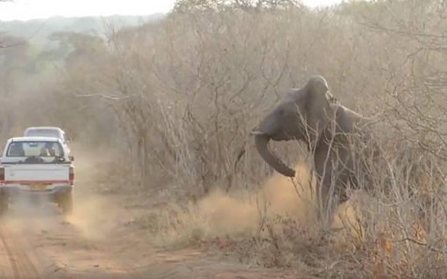 ελέφαντες