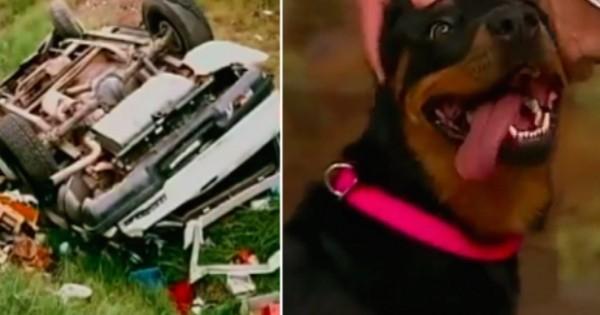 Σκύλος παρέμεινε 13 μέρες στα συντρίμμια του ατυχήματος της οικογένειας του. (Βίντεο)