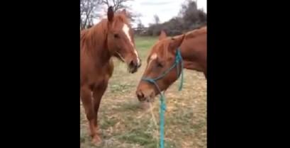 Το άλογο προσφέρει ένα δώρο στην αγαπημένη του (Βίντεο)