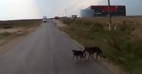 Σκύλος διασώζει τον… φίλο του [βίντεο]