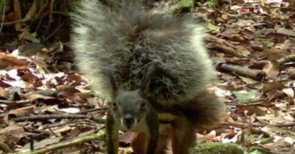 Οι θρυλικοί σκίουροι «βρυκόλακες-δολοφόνοι» κατεγράφησαν για πρώτη φορά! [εικόνες-βίντεο]