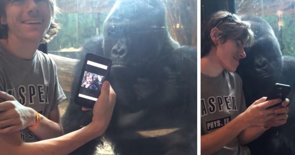 Αυτός ο γορίλας θέλει πραγματικά να δει τις φωτογραφίες από τις διακοπές σου! (Βίντεο)