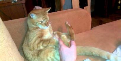 Η γάτα κλωτσάει τον εαυτό της (Βίντεο)