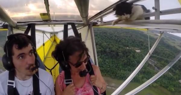 Γάτα κοιμήθηκε στο φτερό αεροπλάνου και ξύπνησε… στον αέρα (Βίντεο)