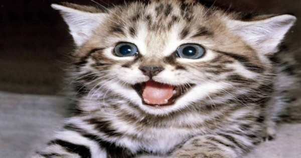 Τελικά η γάτα σου σε αγαπάει και σου το δείχνει (Εικόνες)