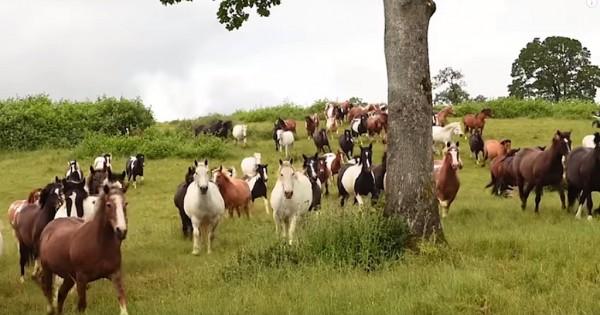 Διέσωσαν 200 άλογα και τώρα χαίρονται την ζωή στον νέο τους αγαπημένο χώρο! (Βίντεο)