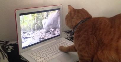 Που πήγε ο σκίουρος; (Βίντεο)