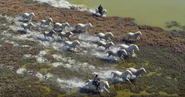 Τα άλογα των Ονείρων μας: Ένα βίντεο έπος προς τιμή τους.