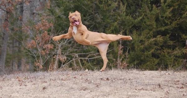 25 αστείες φωτογραφίες από σκύλους που πιάστηκαν σε αστείες πόζες (Εικόνες)