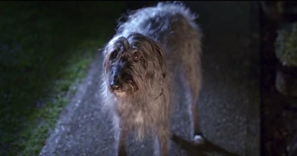 Ένας κακοποιημένος σκύλος ξεφεύγει από τον ιδιοκτήτη του. Πρέπει να το δείτε. (Βίντεο)