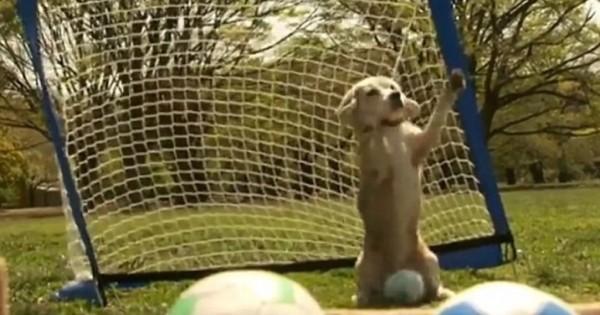 Το κουτάβι του έπιανε τη μπάλα με τις δύο πατούσες. Kαι κατέκτησε βραβείο Γκίνες! (Βίντεο)