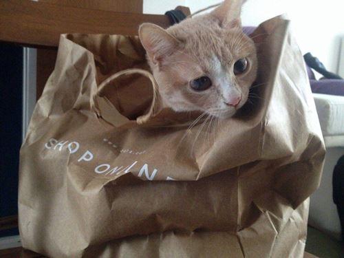 Χαρίζεται Γάτα