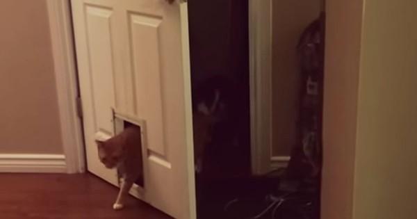 Γάτα περνάει μέσα από μια πόρτα για γάτες έτσι όπως μόνο μια γάτα θα μπορούσε! (Βίντεο)