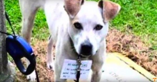 Όλοι αδιαφορούσαν γι' αυτόν τον σκύλο. Μετά όμως μια άστεγη είδε ΑΥΤΟ δεμένο στο λαιμό του… (Βίντεο)
