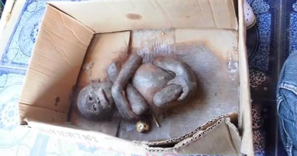 Μικρός ουρακοτάγκος αργοπέθαινε κλεισμένος σε χαρτόκουτο (Εικόνες-Βίντεο)
