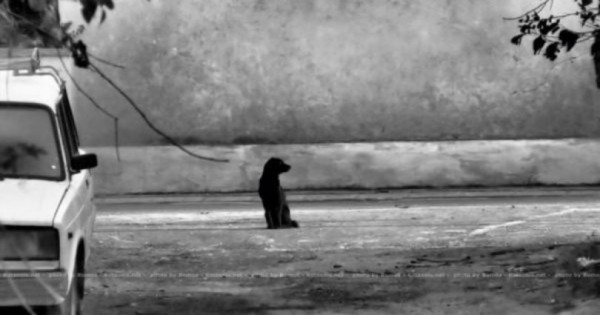 Δείτε πως αισθάνεται ένα ζώο όταν το εγκαταλείπουν… Ας γίνουμε επιτέλους καλύτεροι άνθρωποι! (Βίντεο)
