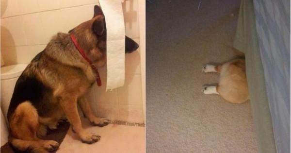 19 σκύλοι που νομίζουν ότι δεν τους βλέπουν! (Εικόνες)