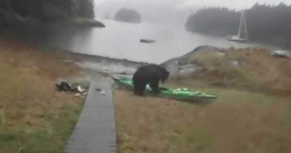 Αυτή η αρκούδα «επιτέθηκε» σε ένα καγιάκ. Δείτε όμως πως αντέδρασε η ιδιοκτήτρια του! (Βίντεο)
