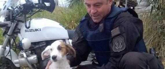 Αστυνομικός της ομάδας ΔΙΑΣ σώζει σκυλάκι από την εθνική οδό και το υιοθετεί (Εικόνες)