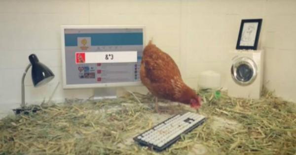 Κοτόπουλο διαχειρίζεται λογιαριασμό μεγάλου εστιατορίου στο Twitter – Πώς… τουιτάρει [βίντεο]
