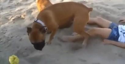 Η εκδίκηση του σκύλου (Βίντεο)