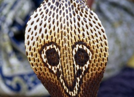 Εντυπωσιακά φίδια (Εικόνες)