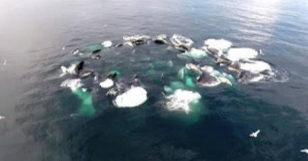 Παρατήρησαν έναν τεράστιο κύκλο να αφρίζει στη θάλασσα και όταν είδαν τι ήταν έμειναν έκπληκτοι (βίντεο)
