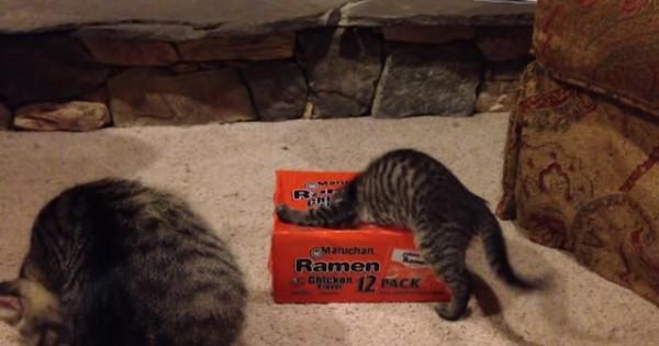 Ο λόγος που αυτή η γάτα θέλει τόσο πολύ να παίξει με αυτό το κουτί είναι… (Βίντεο)