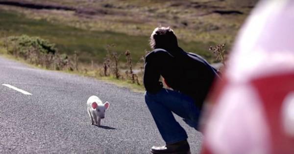 Ένας ταχυδρόμος βλέπει ένα μικροσκοπικό γουρουνάκι στη μέση του δρόμου… Δείτε τώρα τι θα κάνει με το που λυγίσει τα γόνατά του! (Βίντεο)