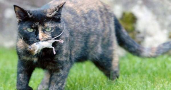 Πρωτοφανές: Δείτε πώς ένα ποντίκι «πείθει» γάτα…να μην το φάει (φωτο)