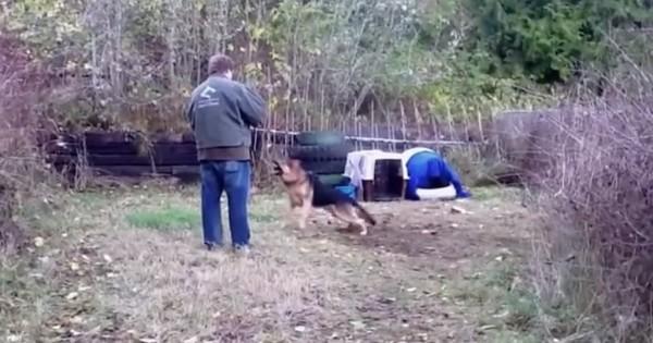 Αυτός ο σκύλος ήταν αλυσοδεμένος όλη του τη ζωή. Δείτε τι γίνεται όταν τον ελευθερώνουν! (Βίντεο)