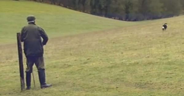 Έστειλε το σκύλο του να πάει στο λόφο. Το τι έφερε πίσω θα σας κάνει να γελάσετε! (Βίντεο)