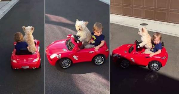 Αυτό το σκυλάκι-σοφέρ ενός μικρού αγοριού είναι ότι καλύτερο θα δείτε σήμερα! (Βίντεο)